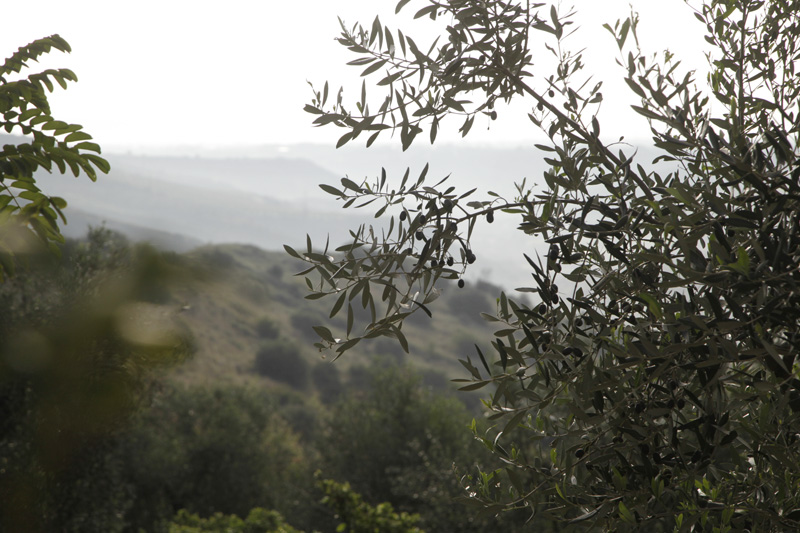 Casa Hera olivskšörd 15 november 2013